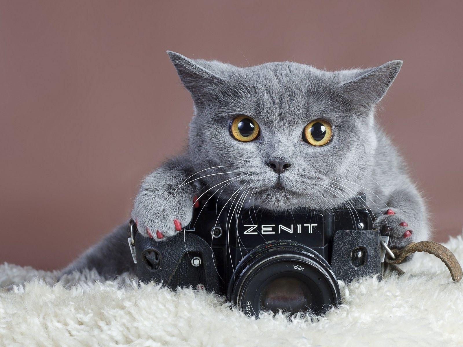 Кошка с фотокамерой