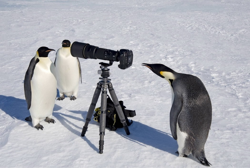 Животные и фотоаппарат 7