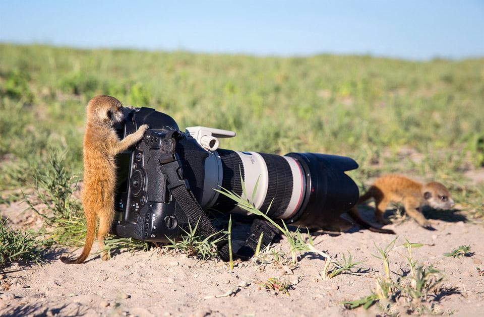 Животные и фотоаппарат 8