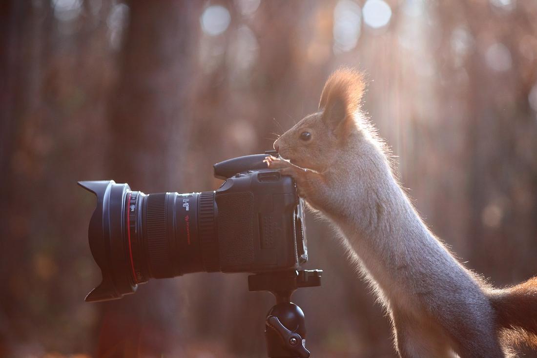 Животные и фотоаппарат 9