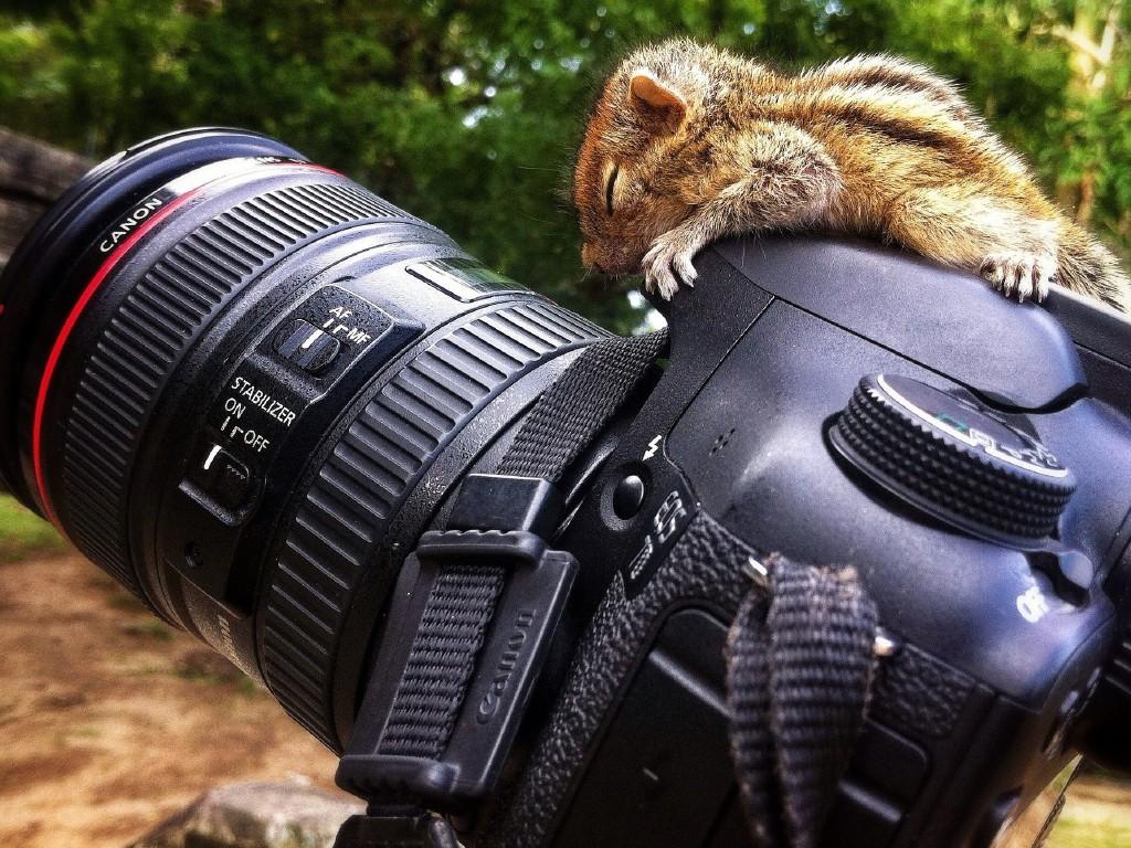 Животные и фотоаппарат 1