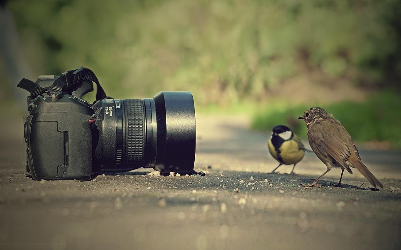 Животные и фотоаппарат 2