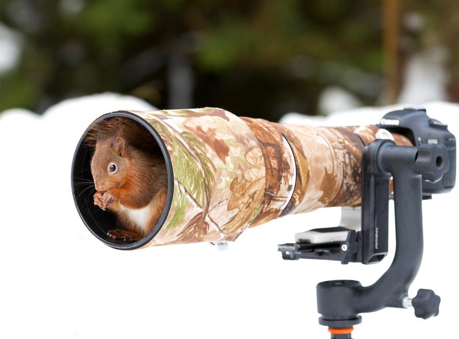 Животные и фотоаппарат 3