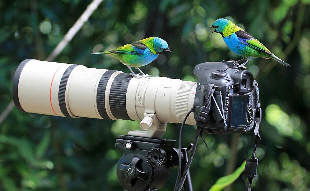 Птички и фотокамера