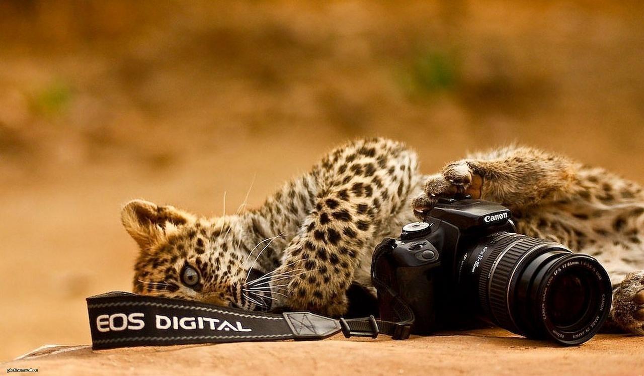 Животные и фотоаппарат 4