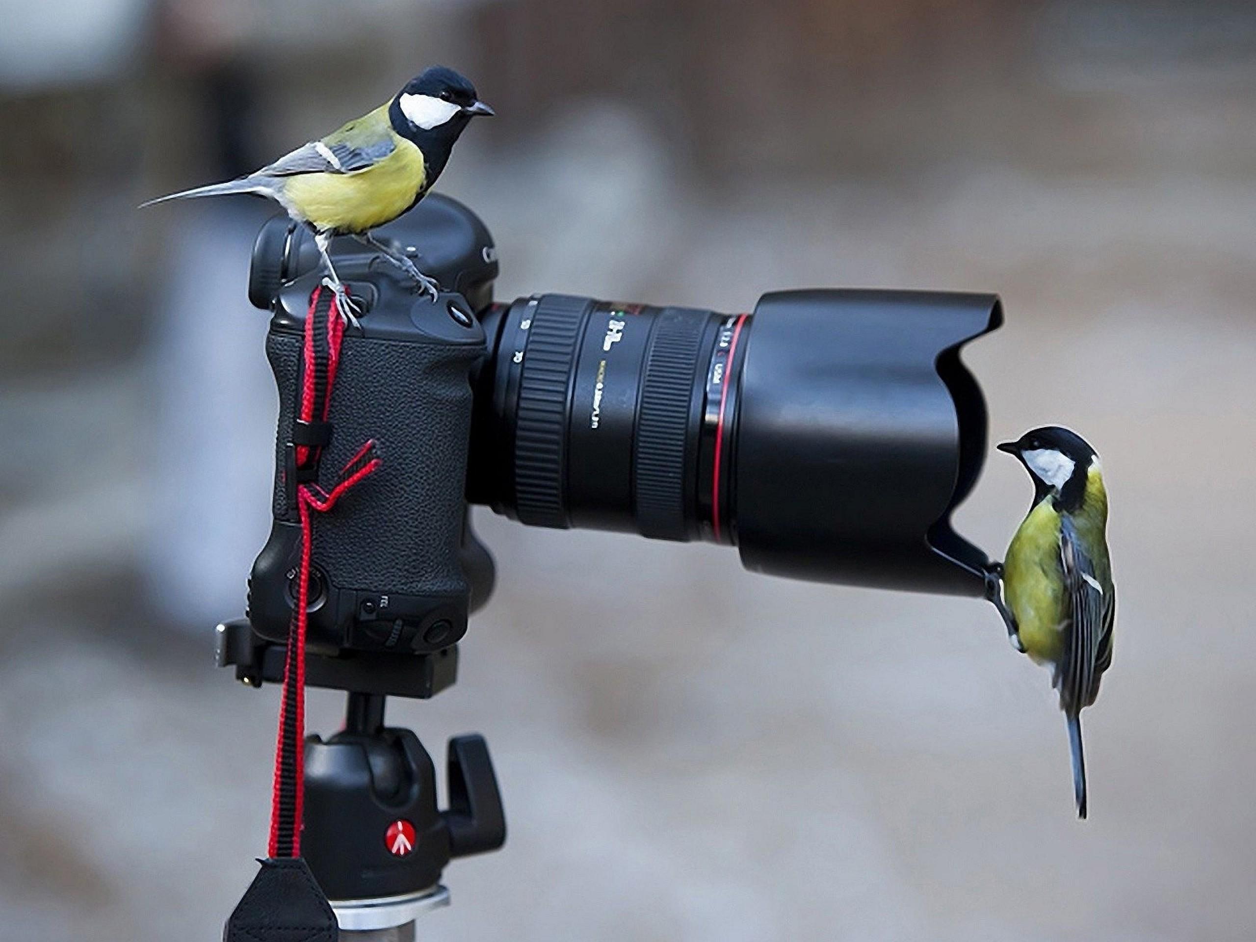 Животные и фотоаппарат 5