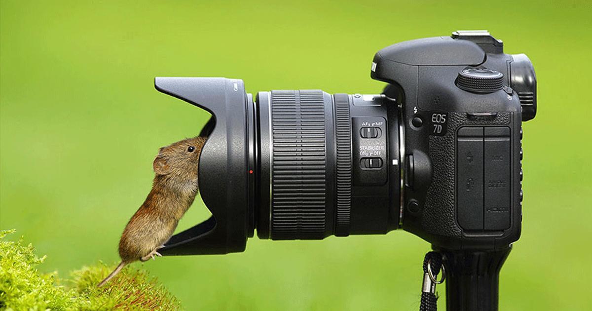 Животные и фотоаппарат 6