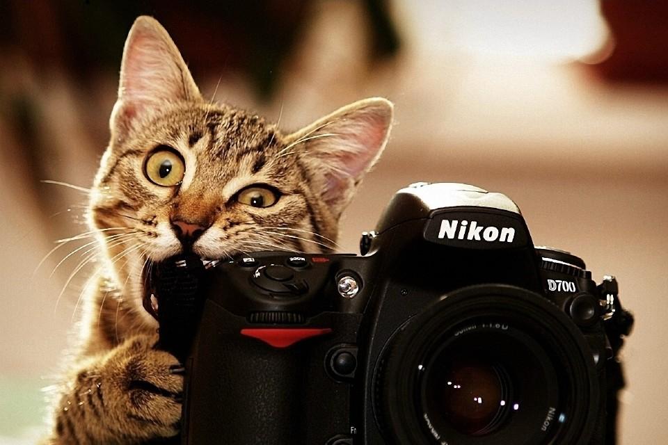 Кот и фотоаппарат 2