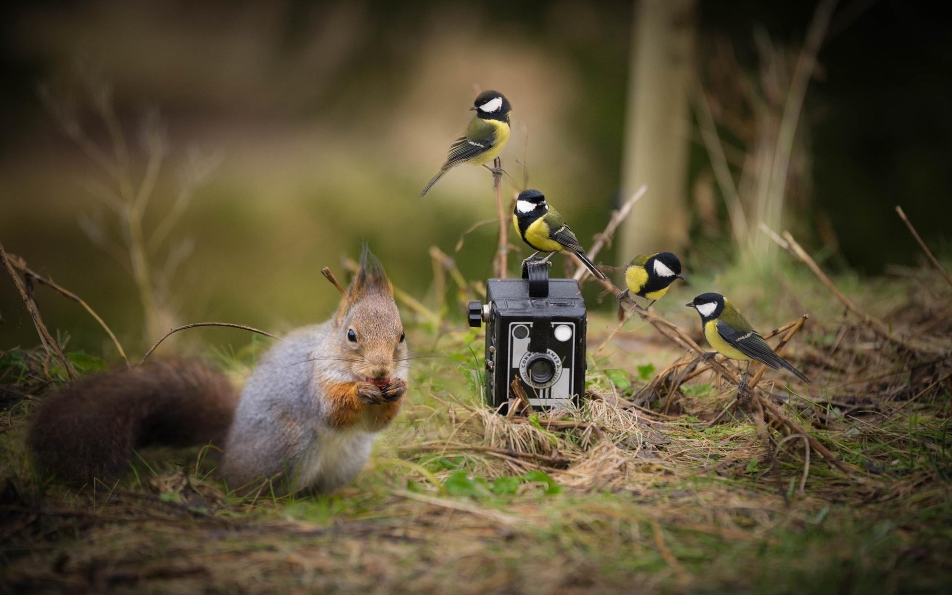 Животные в лесу и фотоаппарат