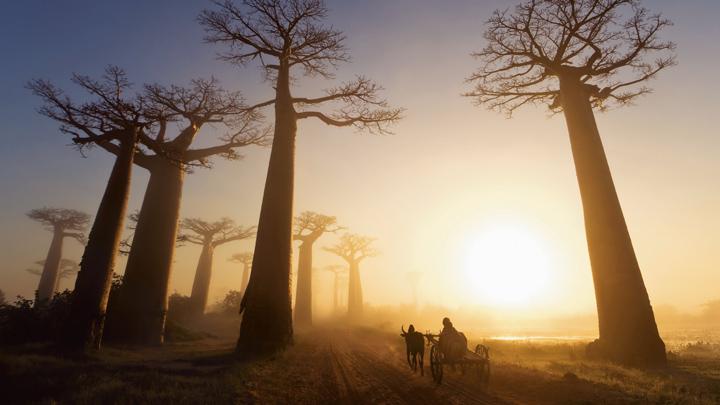 Баобабы в Африке фото 2