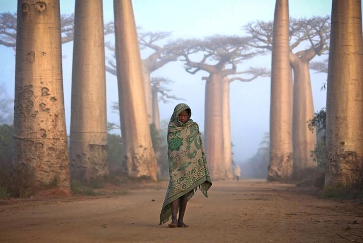 Баобабы в Африке фото 3