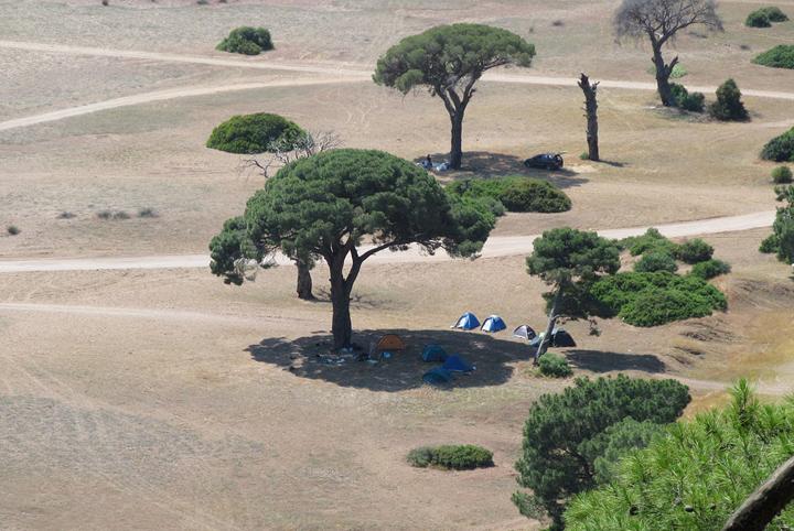 Баобабы в Африке фото 4