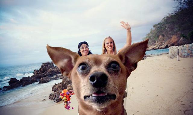 Смешные пляжные фото 6