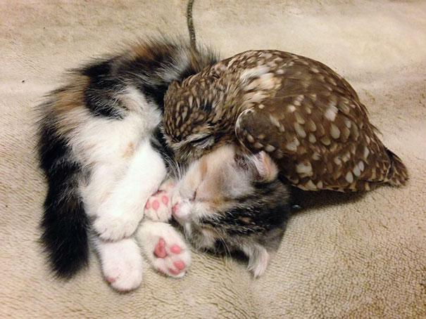 Котенок и совенок фото 1
