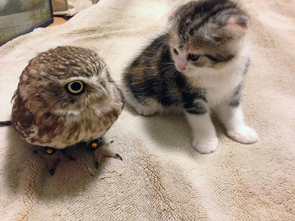 Котенок и совенок фото 2