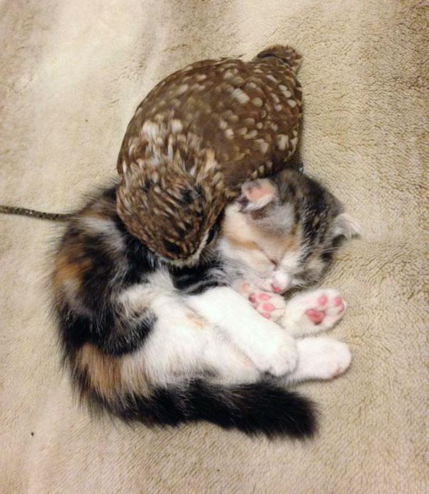 Котенок и совенок фото 3