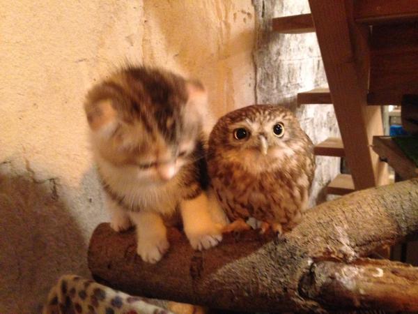 Котенок и совенок фото 4