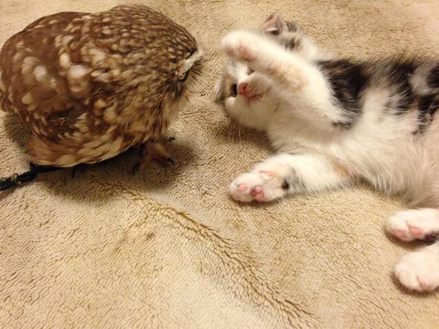 Котенок и совенок фото 5