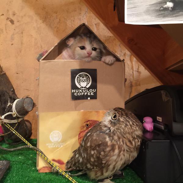 Котенок и совенок фото 6