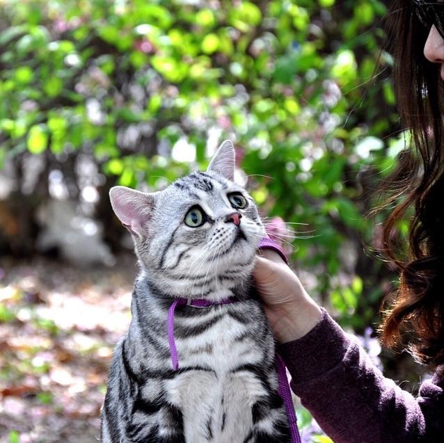Самый грустный кот в мире фото 1