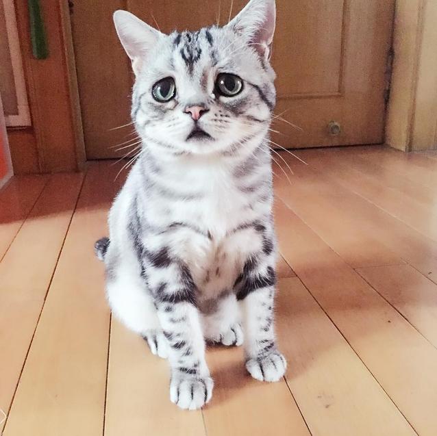 Что за грустный кот в мире