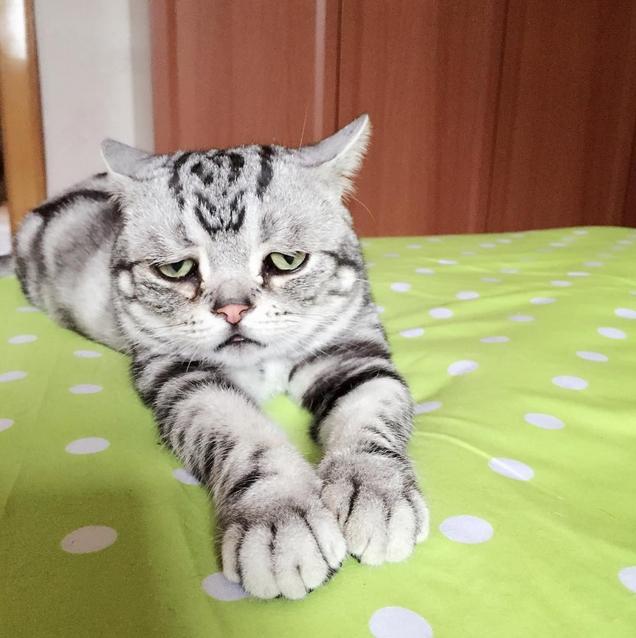 Самый грустный кот в мире фото 4