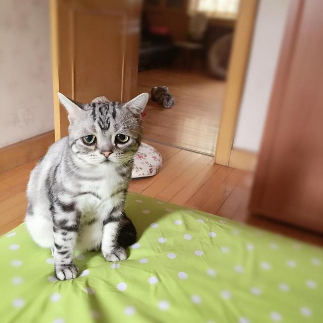 Самый грустный кот в мире фото 5