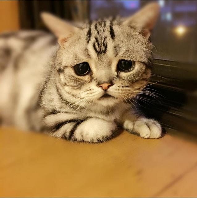 Самый грустный кот в мире фото 6