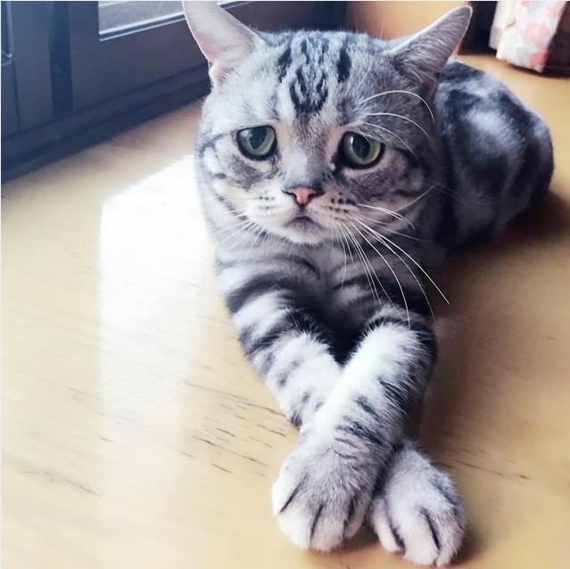 Самый грустный кот в мире фото 7