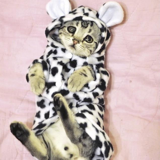 Самый грустный кот в мире фото 8