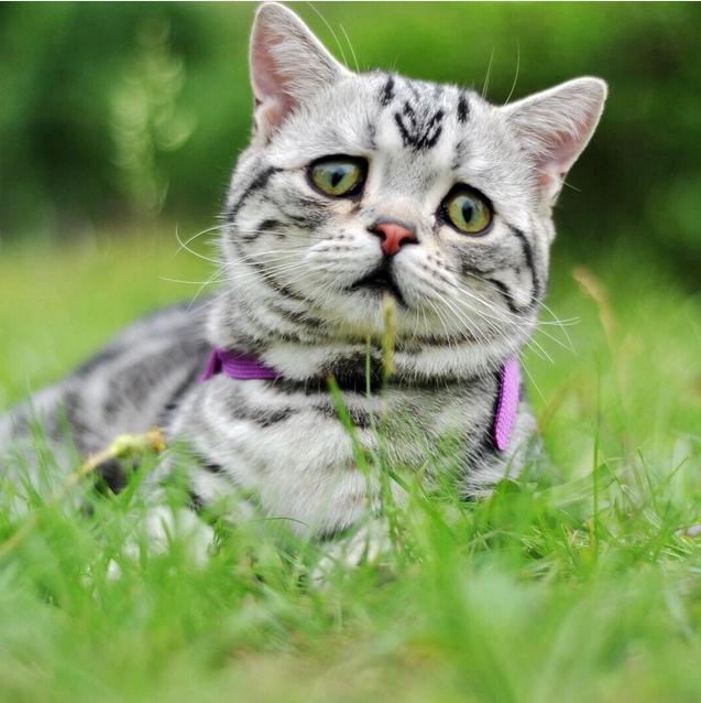 Luhu - самая грустная кошка