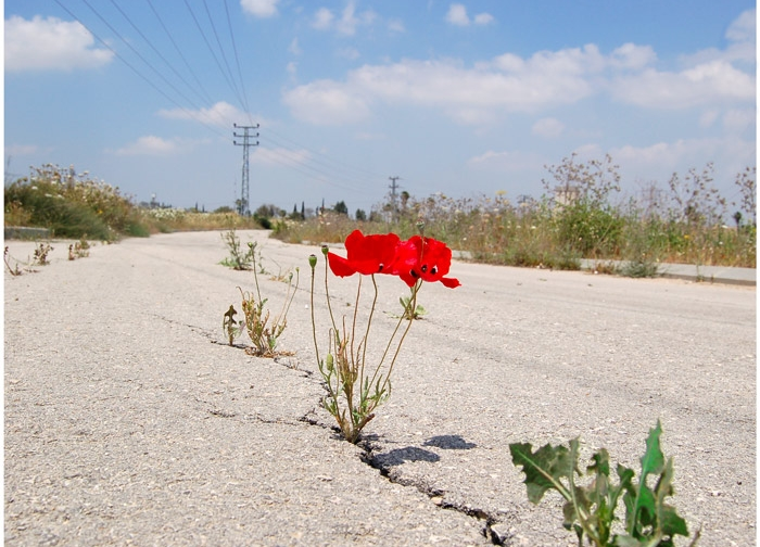 Цветы на дороге