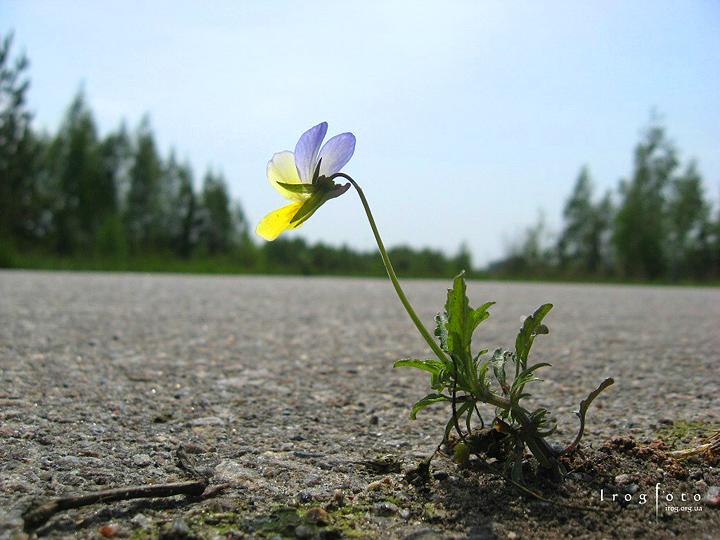 Цветы на дороге 2
