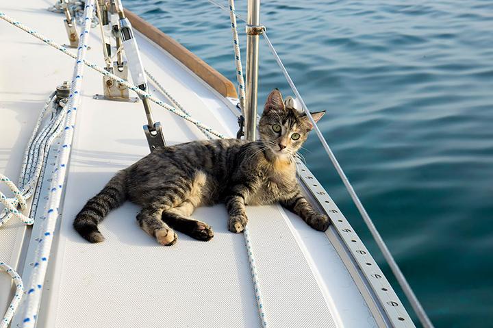 Котшка на яхте