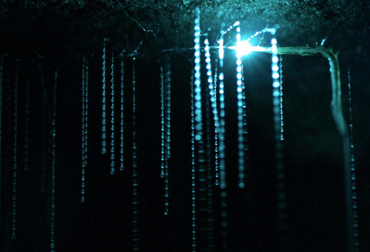 Пещеры светлячков фото 3