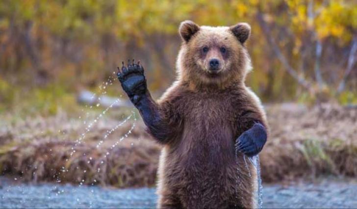 Медведь привет!
