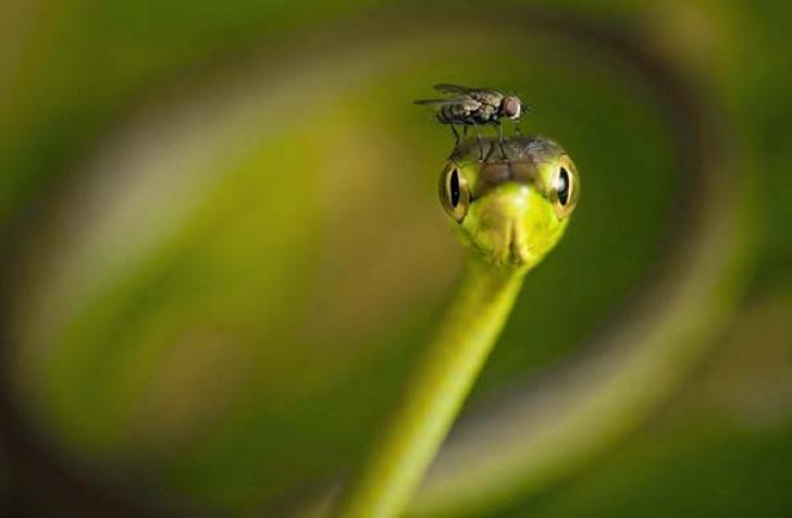 Муха на змейке