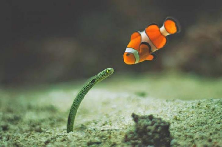 Встреча рыбки со змейкой