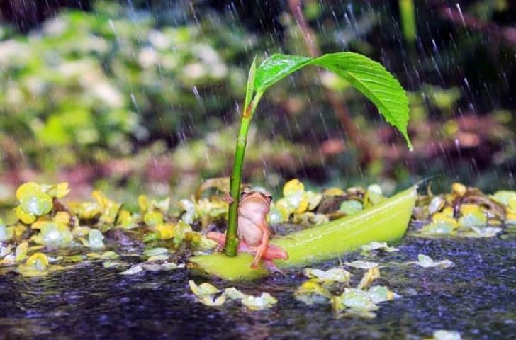 Лягушка под листочком