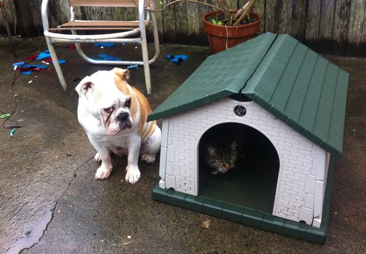 Коты - хозяева в доме