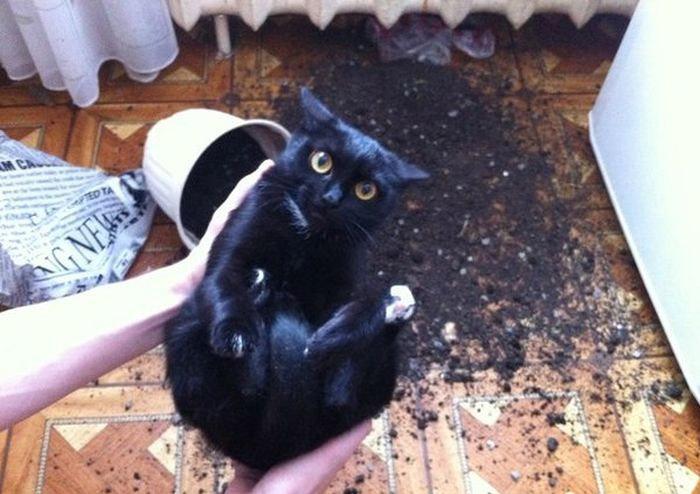 кот перевернул вазон