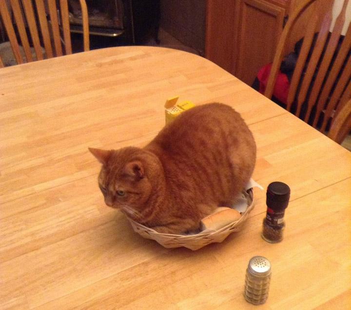 Коты - хозяева в доме 2
