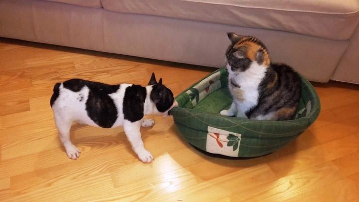 Коты - хозяева в доме 3