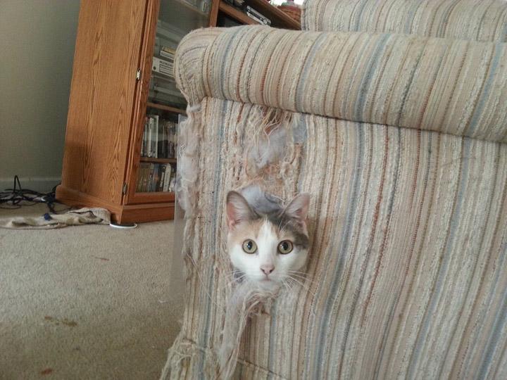 кот порвал диван