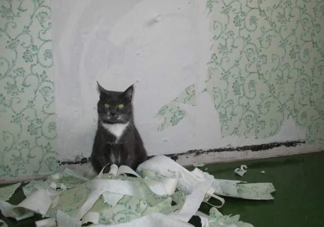 кот порвал когтями обои