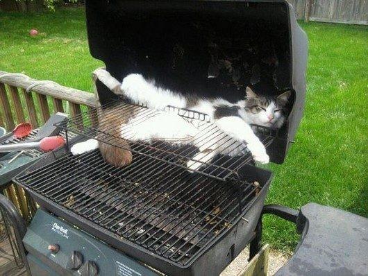 Коты в неожиданных местах фото 1