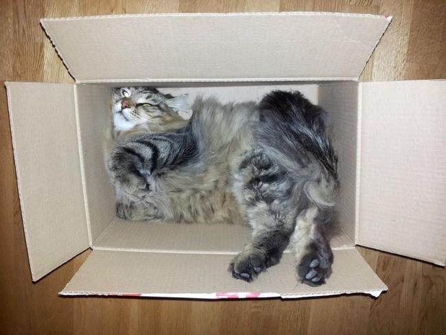 Коты в неожиданных местах фото 10