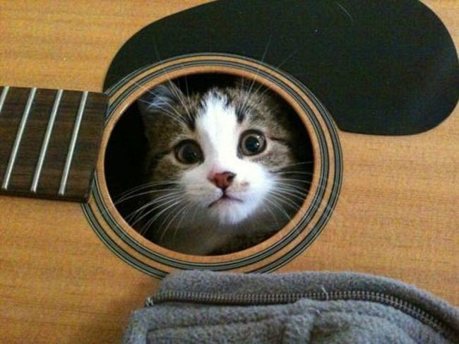 Коты в неожиданных местах фото 2