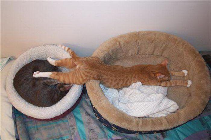 Коты в неожиданных местах фото 5