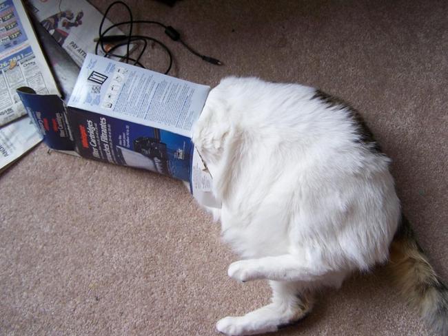 Коты в неожиданных местах фото 7
